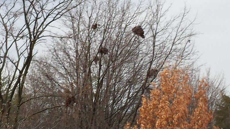 Nests in winter