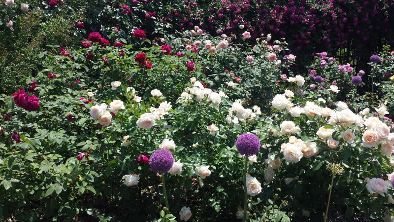 June 2017 Bronx Botanical Garden