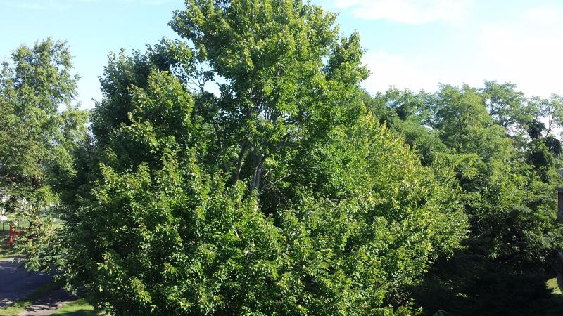 Trees outside my window