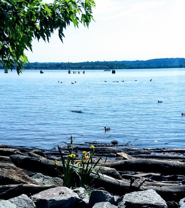 Potomac Vista